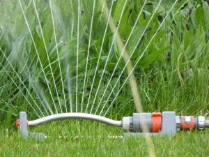 LA lawns lose 70 billion gallons of water a year