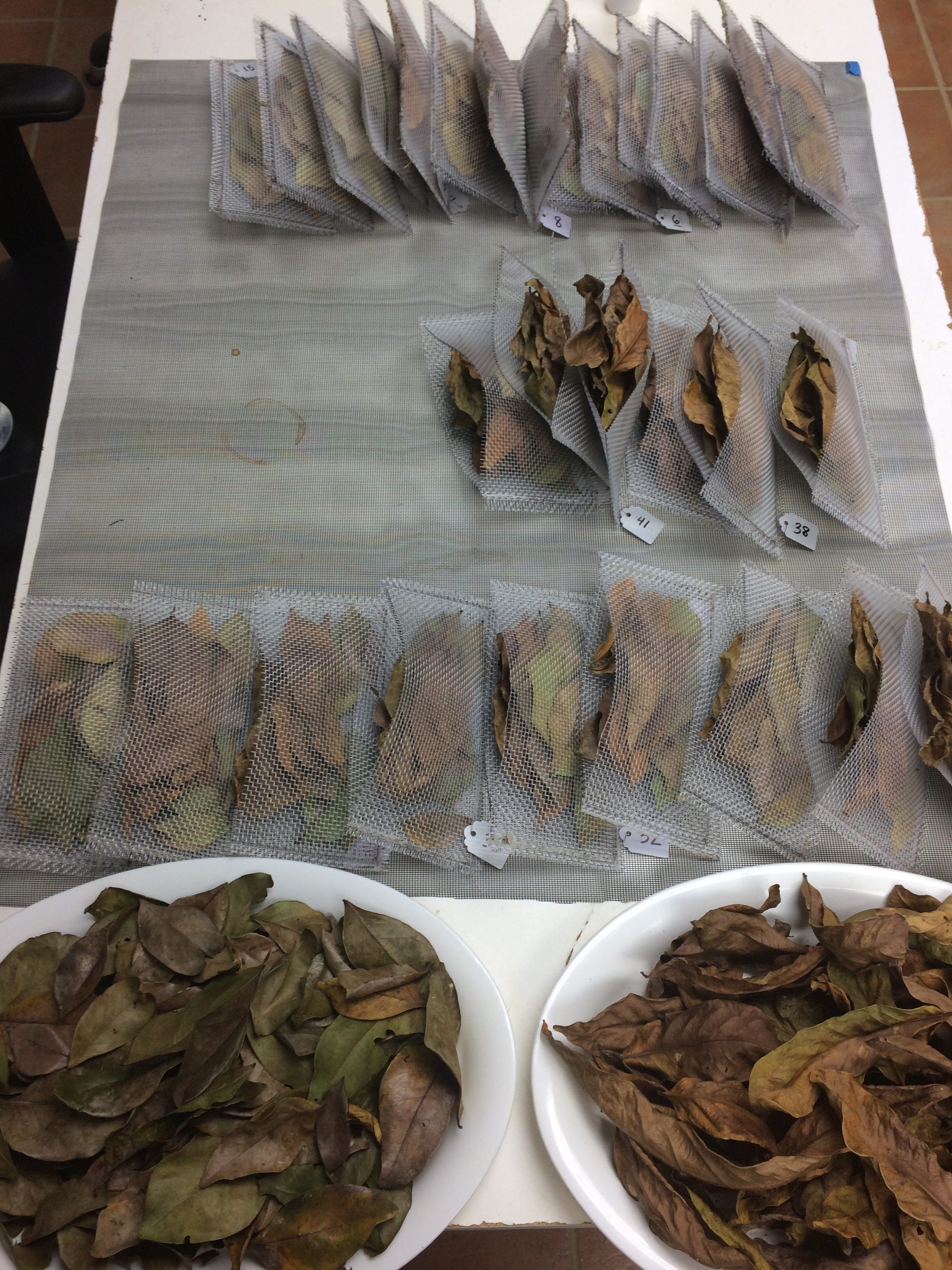 The dried leaf samples were put in mesh bags and numbered before being returned to the warming plots. Credit: Stephanie Roe.