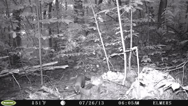 Fishers Are Back In Virginia Mountain Beltway Agu Blogosphere